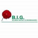 B.I.G. Blumen Import & Grosshandel
